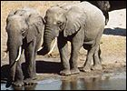 baby elephants: efforts to save and protect the African elephants in KwaZulu-Natal