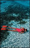 Snorkeling and scuba diving at prime dive venues - Kosi Bay, Black Rock, Rocktail Bay, Mabibi, Sodwana Bay.